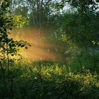 Луч солнца золотого... :: Сергей Иваныч