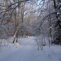 В зимнем лесу :: Маргарита Батырева
