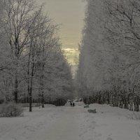 Зимний день :: gribushko грибушко Николай