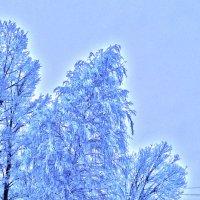 Морозное утро :: Сергей Гроза
