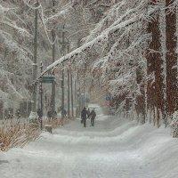 Зимой на аллее парка. :: Василий Ярославцев