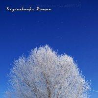 Волшебница зима :: Роман Кривеженко