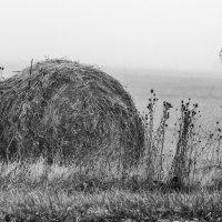 Осеннее туманное... :: Юлия Бабитко