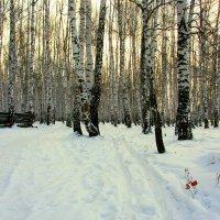 Зимний лес :: Нэля Лысенко