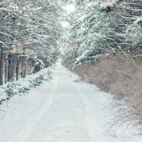 Зимний лес 2019 :: Dani Mark