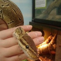 Змейка :: Лариса
