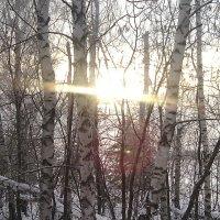 Доброго зимнего утра)) :: Алексей Кузнецов
