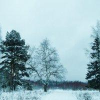 островок деревьев :: Владимир