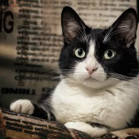 Ну а кошки, мяу, это кошки.... :: Евгеша Сафронова