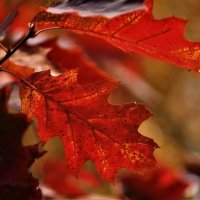 Осенние краски :: Ветер Странствий.орг