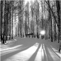 На закате. :: Александр Шимохин