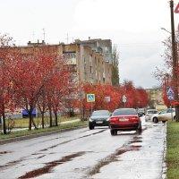 Мой город.Рябиновая улица. :: Венера Чуйкова