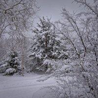 И снова снег... :: Елена Струкова