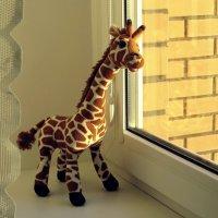 Этот жирафик меня очаровал, он ещё и стишок говорит  милым, почти детским голоском :: Татьяна Смоляниченко