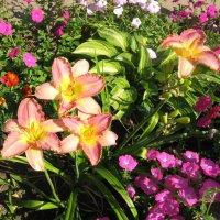 Розовое лето :: minchanka