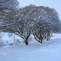 Снежный январь на Муринском ручье :: Евгений