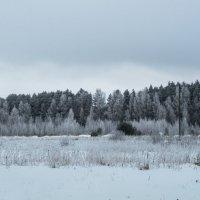 Зимний лес :: Инга Энгель
