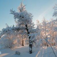 Зимняя серия :: Yuri Mekhonoshin