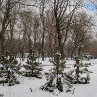 Январь :: Нина Бутко