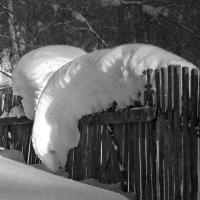 А за забором снег вкуснее ? :: Olenka