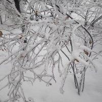 Снегопад :: BoxerMak Mak
