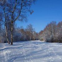 Бело-голубой февраль... :: Galina Dzubina