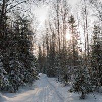 лес зимой :: sayany0567@bk.ru