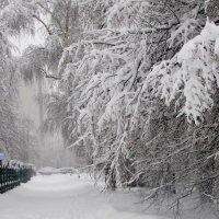 Зимняя красота :: жанна нечаева