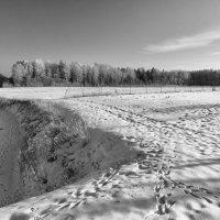 Зимнее поле. :: Геннадий Порохов