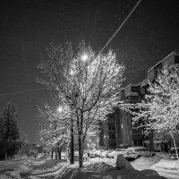 Улица, фонарь, деревья. :: Александр Горячев