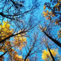 Осень :: Ирина Негара
