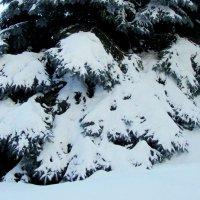 Снежные лапы :: Raduzka (Надежда Веркина)