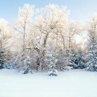 Морозно :: Андрей Щетинин
