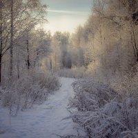 Зима :: Андрей Костров