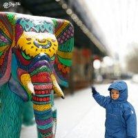 слон :: Дея Ши