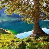 дерево у озера :: Elena Wymann