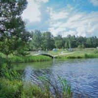 пруд в бицевском  лесопарке :: татьяна Блинова