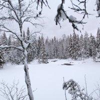 Лесное озеро :: Валентина