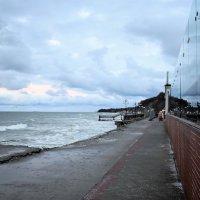 Последствия после январского урагана в Светлогорске :: Марина