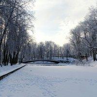 Зимний сад :: Милешкин Владимир Алексеевич
