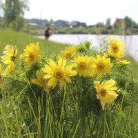 чистота весны :: Антонина Тыртышная (Гладких)