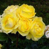 Солнце в цветах..! :: Валерий Подорожный