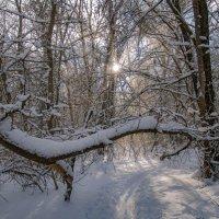 В объятиях зимы :: Наталья Димова