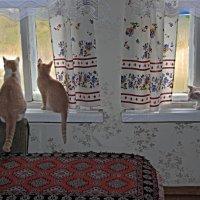 Старые окна. :: Николай Масляев