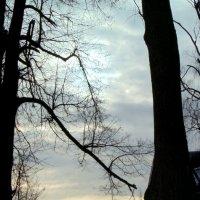 Старые липы :: Любовь