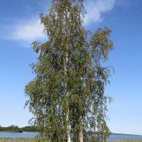 На берегу Онежского озера :: Вера Щукина