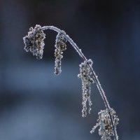 Зимние зарисовки :: Анна Суханова