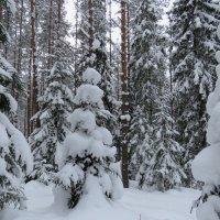в лесу :: Галина