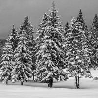 Зима в Татрах :: Сергей Дабаев