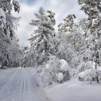 Лыжня России :: vladimir Bormotov